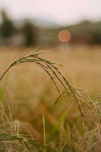 produce selective focus photo of green wheat plant food