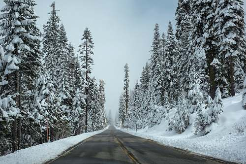 tree road surrounded by pine trees with white snow during daytime trees