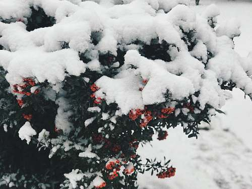 plant green-leafed plant covered with snow during daytime eskişehir