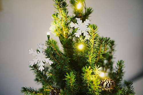photo plant shallow focus photography of green Christmas tree with white snowflakes decor mimosa free for commercial use images