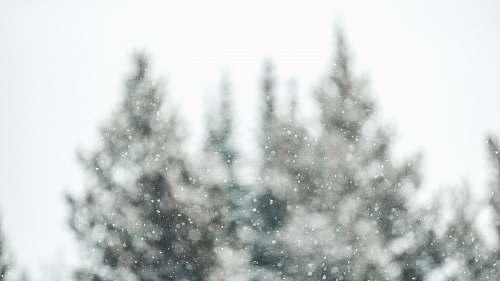 grey selective focus photo of trees snow