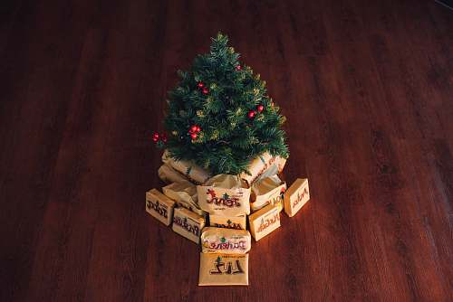 conifer green Christmas tree decor fir