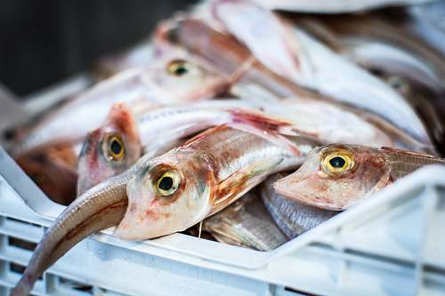 fish caught fishes on white crate herring