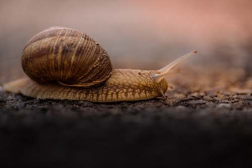 photo snail shallow focus photo of brown snail invertebrate free for commercial use images
