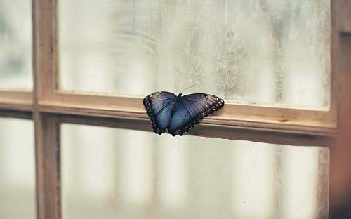 animal photo of butterfly perching on window blue