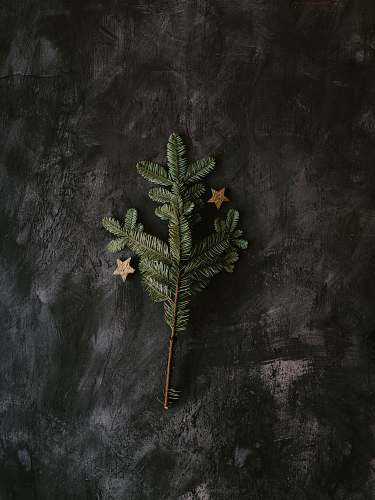 painting green pine tree on gray surface art