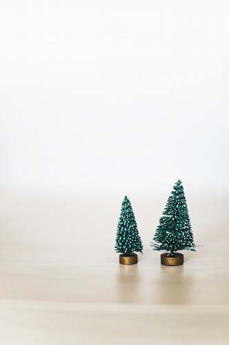 photo tree two green pine trees holiday free for commercial use images
