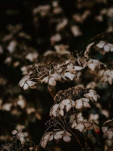 plant brown plant blossom