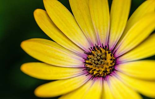 blossom close photography of yellow and purple petaled flower yellow