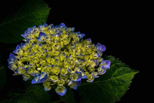 plant cluster of purple and green petaled flower blue