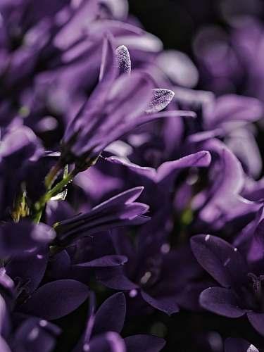 petal focus photo of purple petaled flower purple