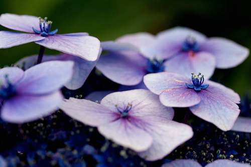 plant white and purple flowers in shallow focus flora