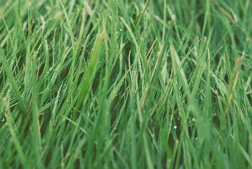 plant green grasses flora