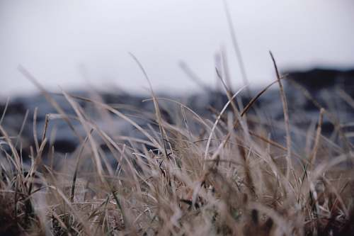 grey selective focus photography of grass field nature