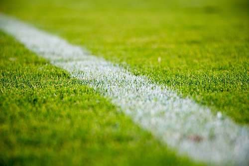 photo football Close-up of a white line on green grass in a soccer field grass free for commercial use images