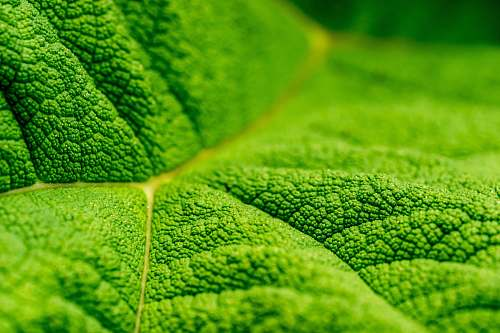 macro close up photo of green leaf texture