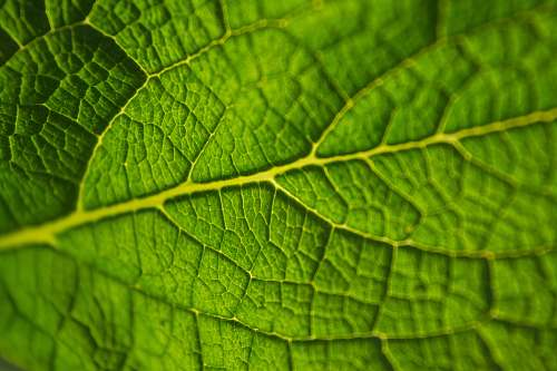 leaf closeup photo of green leaf plant