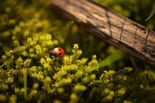 photo macro closeup photography of ladybug perched on green leafed plant nature free for commercial use images