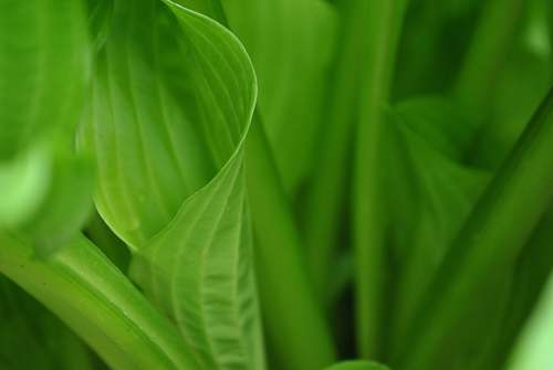 plant green leaves in macro shot photography macro