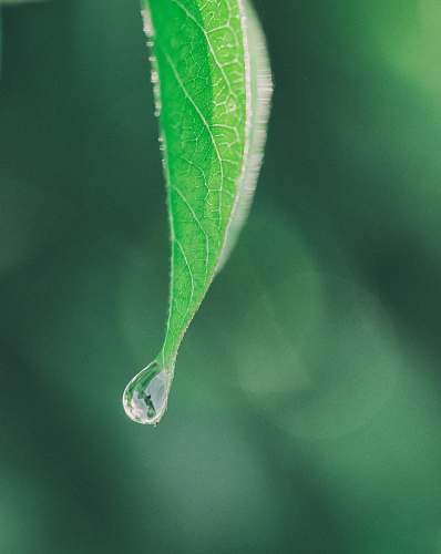 water photography of green leaf droplet