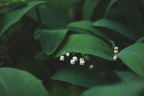 photo flower shallow focus photography of white flowers spring free for commercial use images