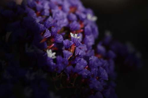 person selective focus photography of purple petaled flowers people