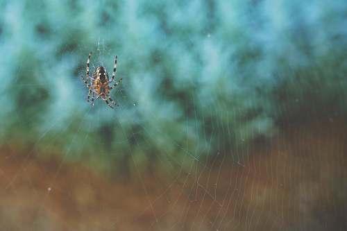 arachnid brown and black spider on web spider