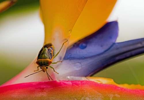 australia closeup photo of green and brown stinkbug bug