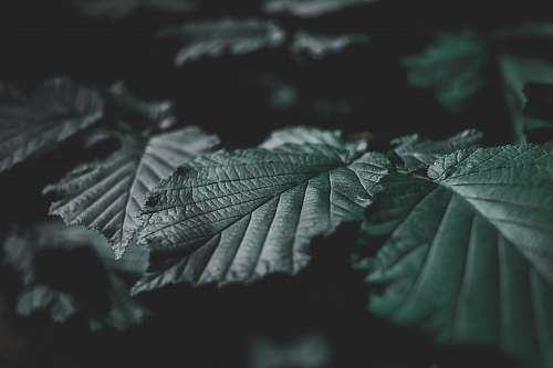 grey closeup photo of green leafed plant tree