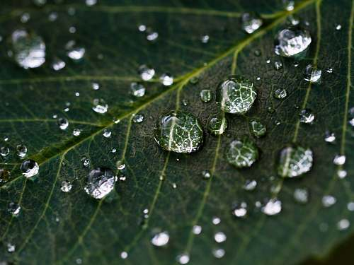 nature droplets on green leaf water