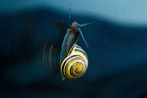 animal yellow and brown snail top of body of water snail
