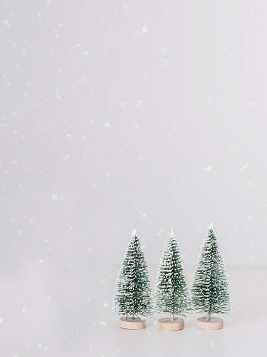 tree green pine trees under snowy weather abies