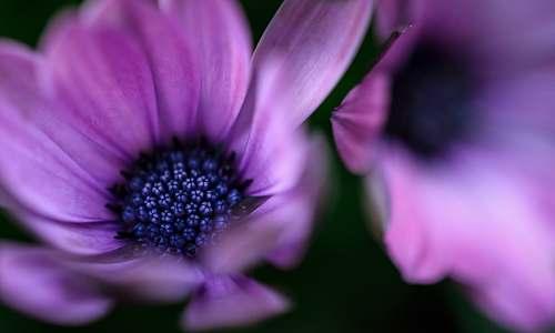 flower macro photography of purple petaled flower purple