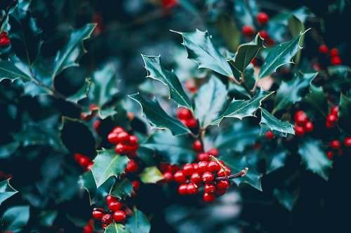 food red cherries fruit