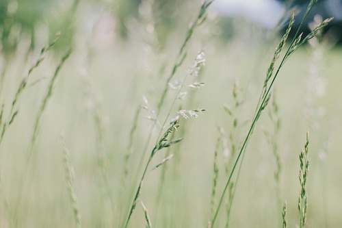 photo grass selective focus photography of green leaf plants flora free for commercial use images
