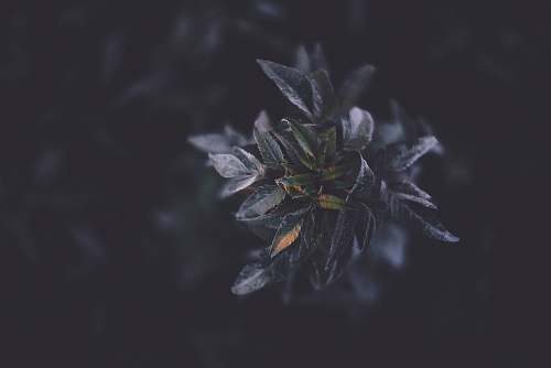 grey selective focus photography of green plant tree