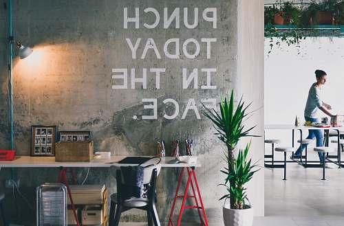 office green plant beside white desk plant