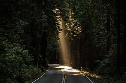 photo forest empty concrete road covered surrounded by tall tress with sun rays tree free for commercial use images