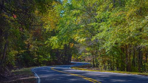 photo freeway empty highway in the middle of tall trees at daytime highway free for commercial use images
