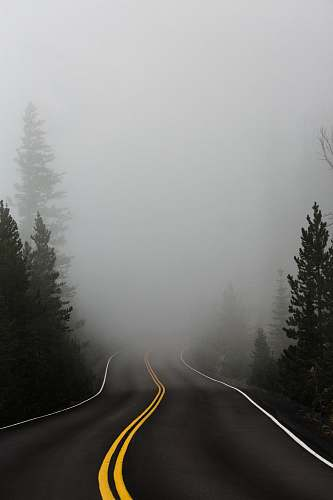 grey empty road surrounded with trees with fog fog