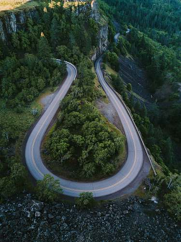 oregon horseshoe road surrounded with tall trees forest