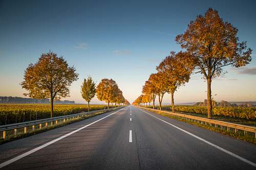 highway long straight road with trees on the side nature