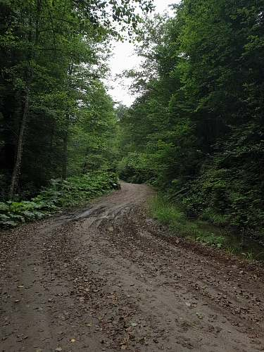 photo dirt road pathway between trees during daytime gravel free for commercial use images