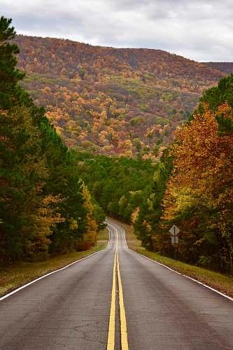 highway road between field of trees freeway