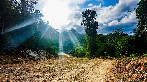 photo dirt road sun shining on trees gravel free for commercial use images
