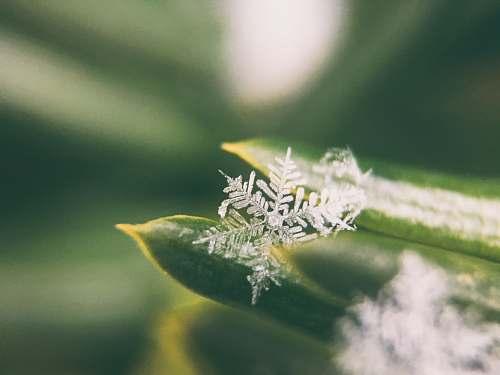 winter focus photo of snowflakes ice