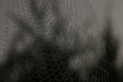 web close up shot of spider web spider web
