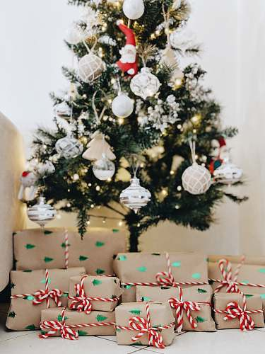 plant bundle of gifts near Christmas tree christmas tree
