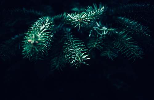 plant green leafed plant pine
