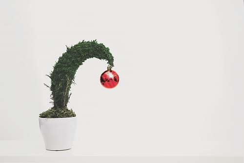 planter green leafed plant with red bauble jar